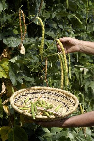 jewess: garden beam