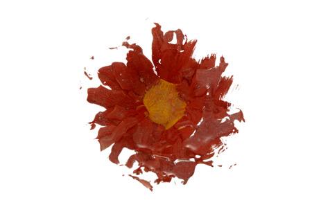distorted image: Flower
