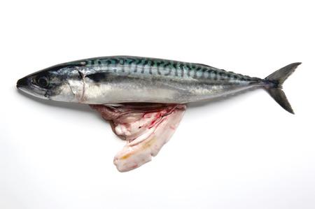 guts: mackerel with his guts