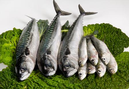 leaf vegetable: Sardines and mackerel on a leaf vegetable