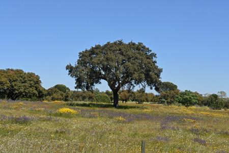flor: Spring landscape of Alentejo landscape between the village of Flor da Rosa and Alpalhao, Alentejo region, Portugal Editorial