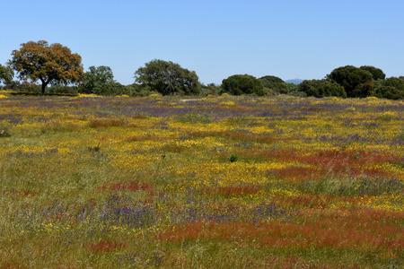 flor: Spring landscape of Alentejo landscape between the village of Flor da Rosa and Alpalhao, Alentejo region, Portugal Stock Photo