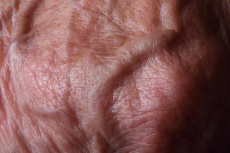 veins: veins texture, Stock Photo