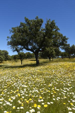 Spring landscape of extremadura landscape near  the village of Valencia de Alcantara,Caceres province, extremadura, Spain Stock Photo
