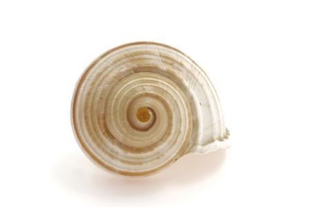 snail Banque d'images