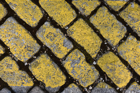 Yellow cobble,