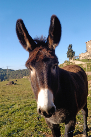 catalan donkey Photo shoots in Sant Feliuet de Terrassola, Barcelona