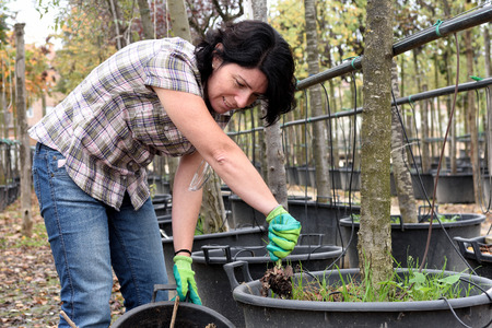 woman working in the garden center, Stock Photo