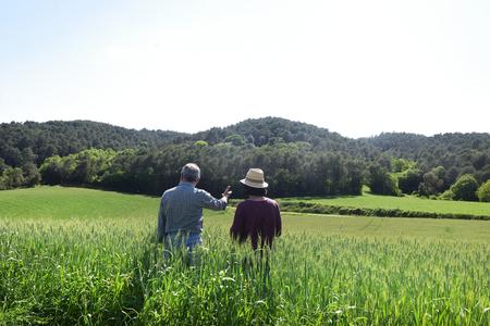 couple farmer in a wheat field Stockfoto