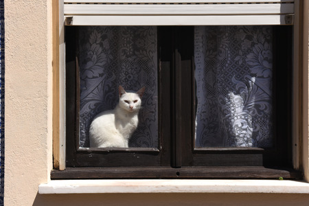 Cat basking in a window in Aveiro, Portugal