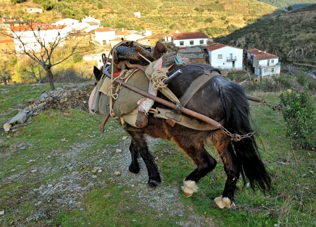 farm implements: Mule loaded with farm implements back to the village