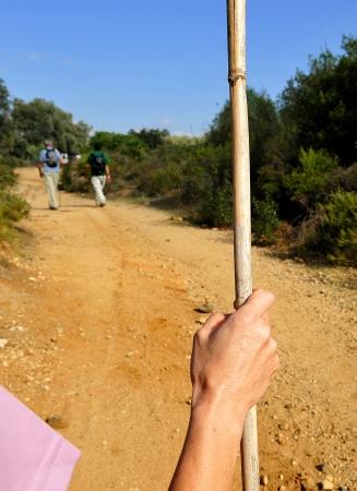 camino: Pilgrims walking the Camino de Santiago