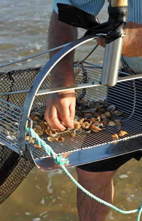 Fisherman gathering clams on the beach sand Stock Photo
