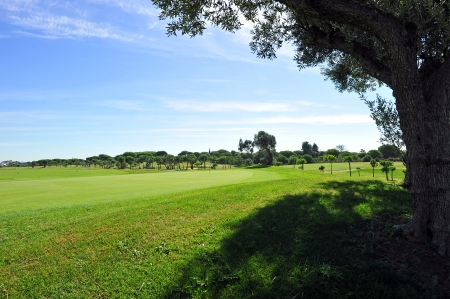 extensive: Extensive golf course on a sunny day between olive, Andalucia, Spain Stock Photo