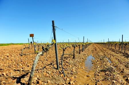 outbreaks: Vineyard in winter, first outbreaks
