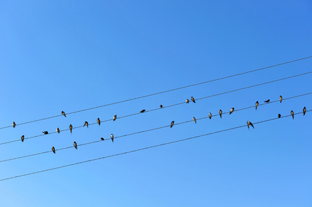 Many birds sitting on electric wires, Andalusia, Spain photo