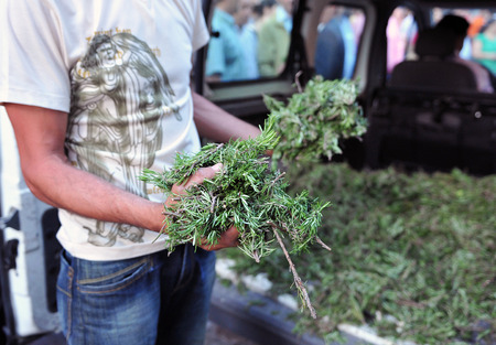distributing: Man on the streets distributing rosemary, Corpus Christi in Andalucia, traditional scene Stock Photo