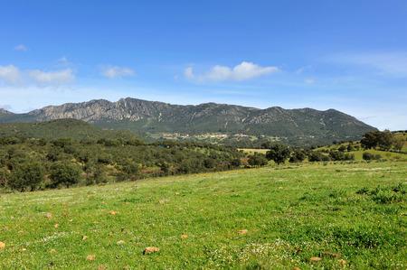 シエラ マドロナの風景地中海の森林、モレナ、シウダー ・ レアル県、ラマンチャ Castilla などスペイン