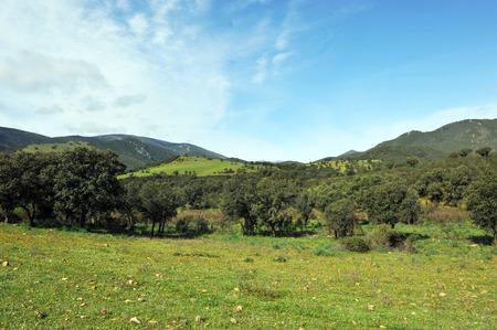 mediterranean forest: Sierra Madrona, landscape of Sierra Morena, Mediterranean forest, Ciudad Real province, Castilla la Mancha, Spain Stock Photo
