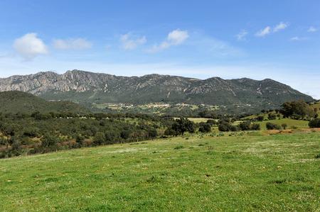モレナ山脈の風景地中海の森林、シエラ マドロナ、シウダー ・ レアル県、カスティーリャ ・ ラ ・ マンチャ州、スペイン
