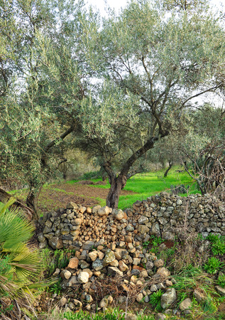 Land cultivated in terraces, olive groves, orchards photo