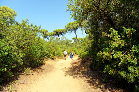 mediterranean forest: Walkers in a pine forest, Mediterranean forest, Las Canteras, Puerto Real, C�diz, Andalusia, Spain Stock Photo