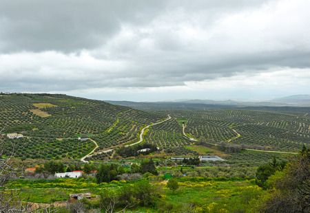 olive groves: Landscape of olive groves from Ubeda, province of Jaen, Spain Stock Photo