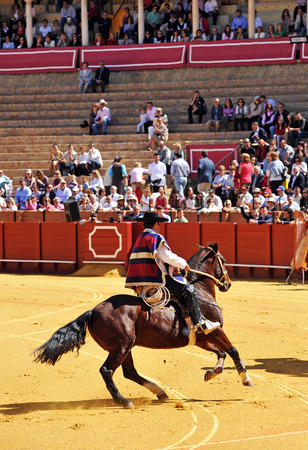 bullring: Rider on horseback at a performance, Maestranza bullring, Seville, Andalusia, Spain Editorial