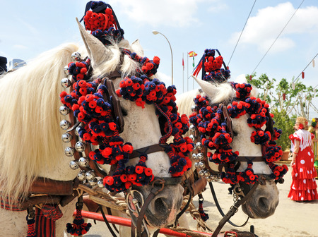 feast: Two white horses at the Sevilla Fair, Feast in Spain Stock Photo