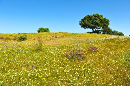 extremadura: Springtime in the Cornalvo Natural Park, Extremadura, Spain
