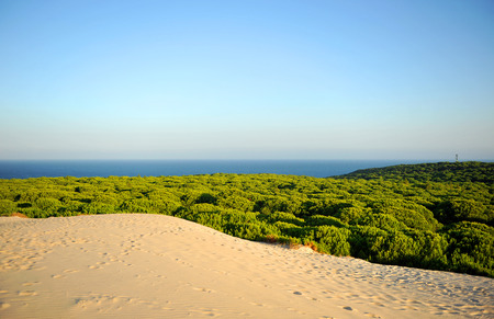 Dunes and pine forests in the Donana National Park with the Atlantic Ocean in the background, Huelva, Spain