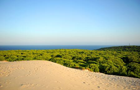 Dunes et forêts de pins dans le parc national de Donana avec l'océan Atlantique en arrière-plan, Huelva, Espagne Banque d'images - 62041200