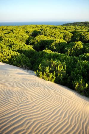atlantic ocean: Dunes and pine forests in the Donana National Park with the Atlantic Ocean in the background, Huelva, Spain