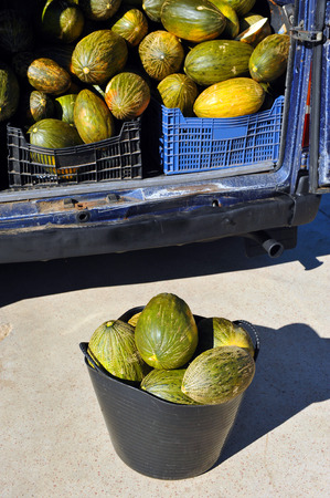 basketful: Melons, van on the market