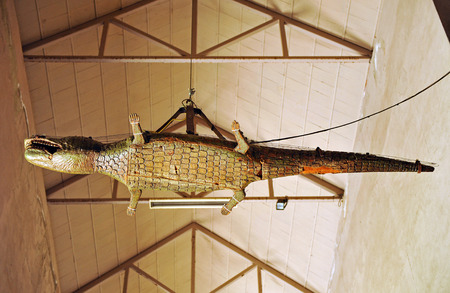 southern europe: The famous crocodile in the cathedral of Seville, Andalucia, Spain, Southern Europe