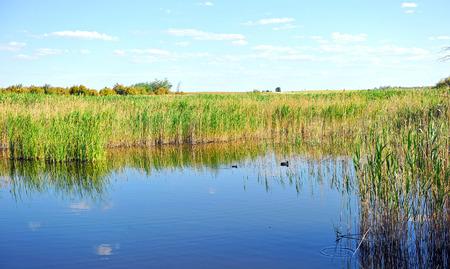 Wetland, Tablas de Daimiel National Park, Ciudad Real, Castilla la Mancha, Spain