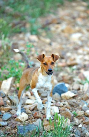 small shepherd dog on the field Stock Photo