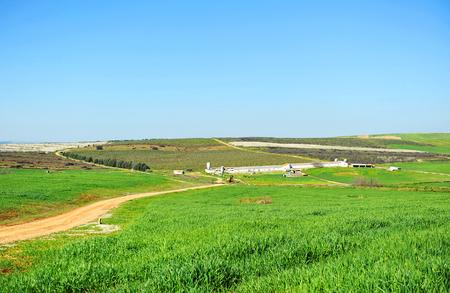 Cereal crop farm in the region of Tierra de Barros, province of badajoz, extremadura, Spain