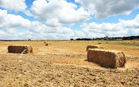 Straw bales stacked in a field of grain harvested, Badajoz province, Extremadura, Spain