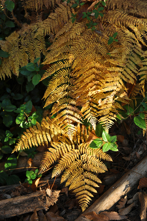In the heart of the forest, ferns, sierra de Huelva, Spain