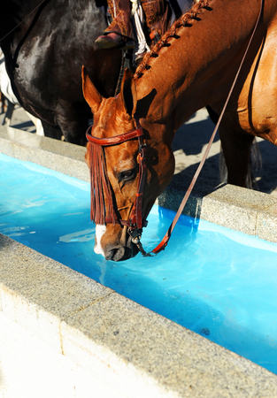 Horse drinking water at the fair in Seville, Spain