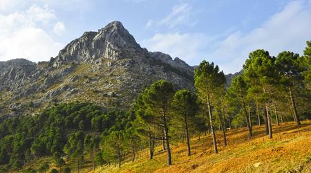 Sierra de Grazalema Natural Park, province of Cadiz, Andalusia, Spain Banque d'images - 106188440