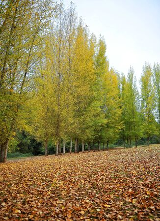 Forest at autumn in the Natural Park of Sierra Norte of Seville near San Nicolas del Puerto, a village in Seville province, Andalusia, Spain Foto de archivo