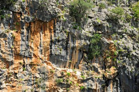 Vulture nests in the Buitreras Canyon -Canon de la Buitreras- famous gorge of the Alcornocales Natural Park, near Cortes de la Frontera. Malaga Province, Andalusia, Spain.