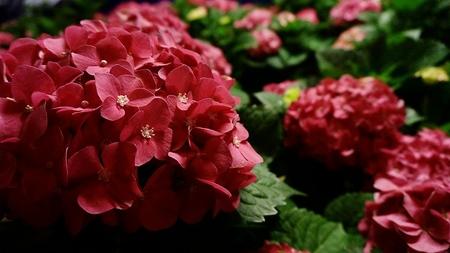 blooms: Full Blooms