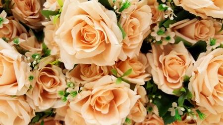 mujer con rosas: Pastel Peach Colour Roses