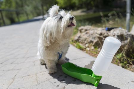 Water pet.
