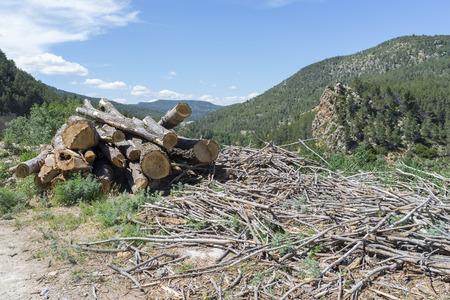 logs: Logs.