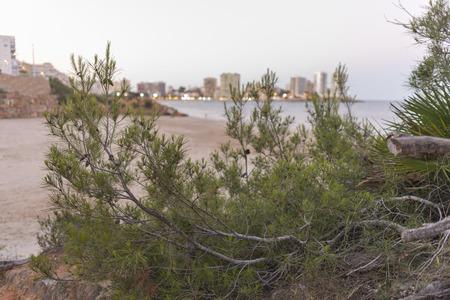 plano: Small beach in Oropesa del Mar Castellon, Spain.