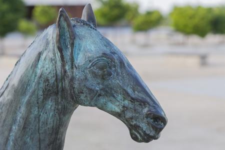 cabeza de caballo: Cabeza de caballo.